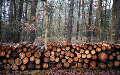 איך יוצרים רהיטים מעוצבים מעץ?